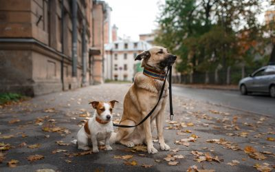 How will your pet be cared for?